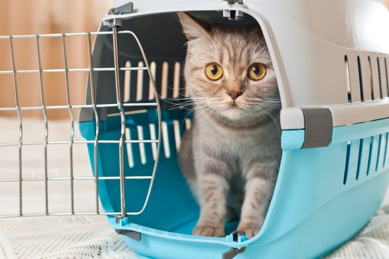 Le transport d'animaux lors de déménagement
